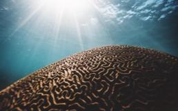Comment éviter la surcharge cognitive