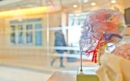 Les neurosciences pour mieux former et apprendre